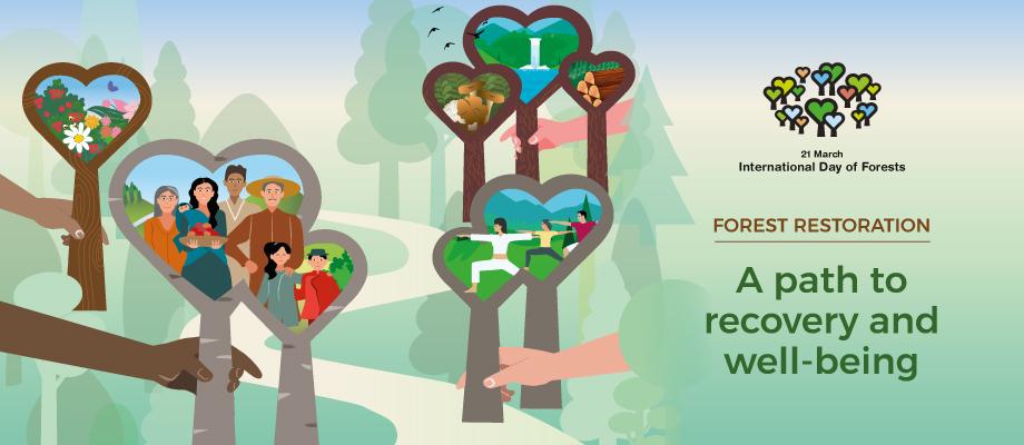 Restabilirea pădurilor: o cale spre recuperare și bunăstare